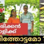KERALA STYLE ORGANIC BACKYARD VEGETABLE GARDEN TOUR | American Malayali Farm [Malayalam vlog ]