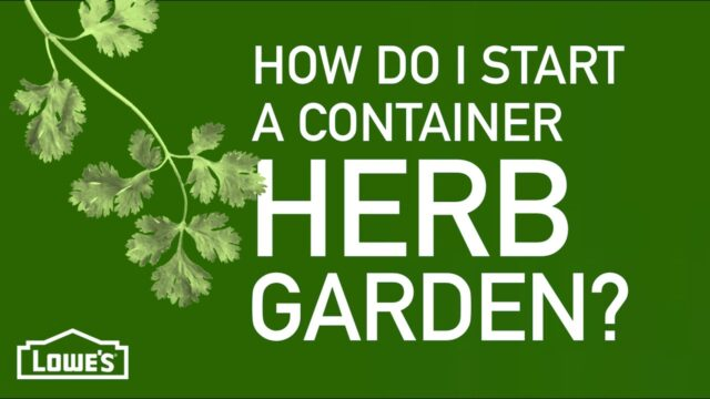 How Do I Start a Container Herb Garden? | Gardening Basics w/ William Moss