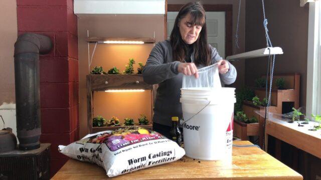 Compost Tea for hydroponics