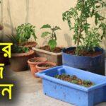 আমার ছাদ বাগান – My Rooftop Garden – Shyamal Bangla