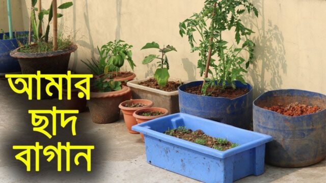 আমার ছাদ বাগান – My Rooftop Garden – Shyamal Bangla