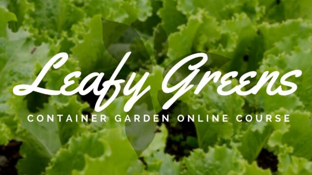 Leafy Greens Container Garden Course