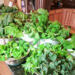 29 Day Indoor Organic Herbs & Greens Harvest: Garden Tower LED Lighting Kit