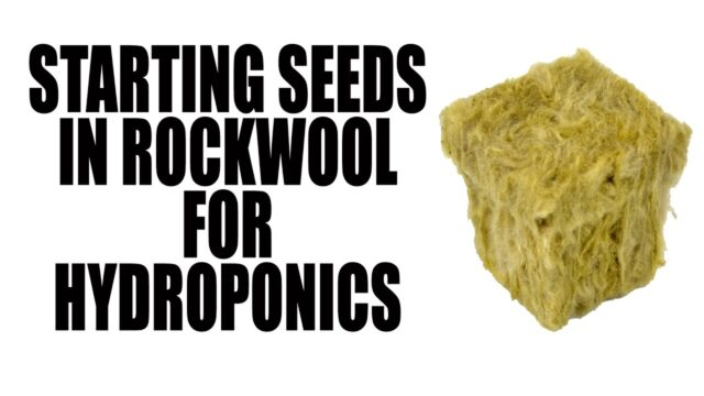 Planting Seeds in Rockwool for Hydroponic Growing