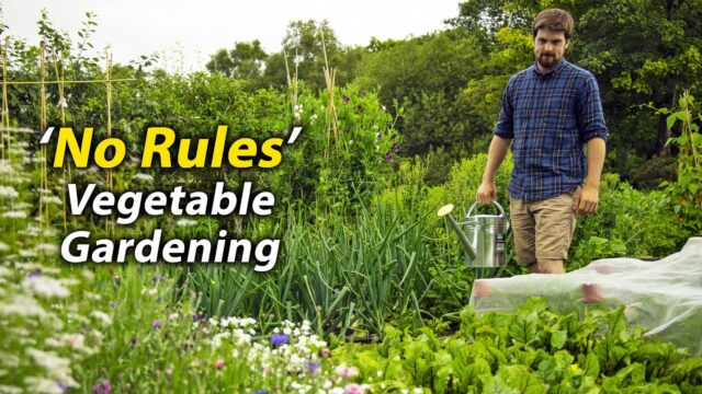 'No Rules' Vegetable Gardening | A Different Way of Growing Food | An Introduction