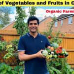 22 Types of Vegetables and Fruits In our Garden  Vegetable Garden Tour in England  Sangwans Studio
