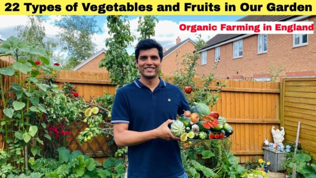 22 Types of Vegetables and Fruits In our Garden| Vegetable Garden Tour in England| Sangwans Studio