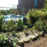 Digging Deeper with Backyard Farmer | Sustainable School Gardens Part 2