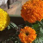 Our first flower Garden. Kids Gardening Video