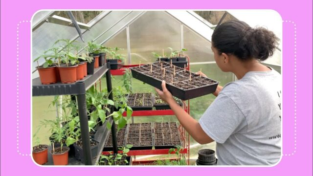 How to Start Seeds for a Vegetable Garden
