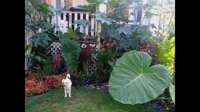Tropical Garden in Chicago