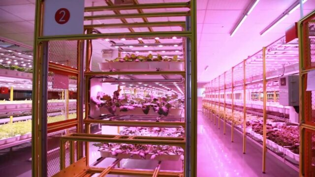 Eponic's Autocrop – Automated Vertical Hydroponic Farming Solution