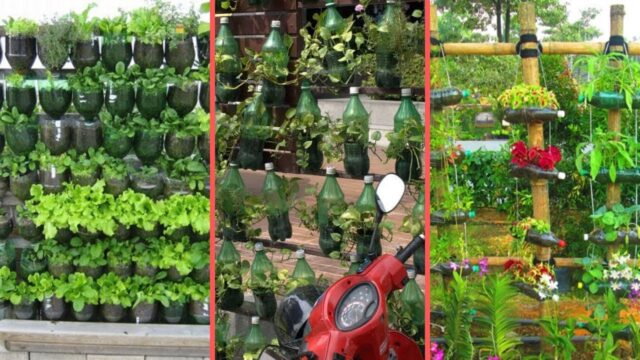 Plastic Bottle Garden Ideas||Vertical Gardening Ideas||Home Gardening