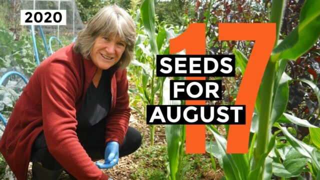What to Sow in August 2020 | Easy to Grow Food | Self-sufficient Vegetable Garden.
