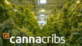 Canna Cribs: E2 – Grow Op Farms/Phat Panda – Cannabis Grow Operation in Spokane, Washington