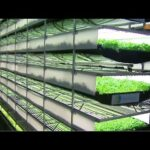 Watch This Very Unique Indoor Farming That Is Already At Another Level