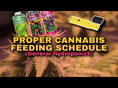 Feeding WEED Plants For BIGGER YIELDS – General Hydroponics FloraSeries