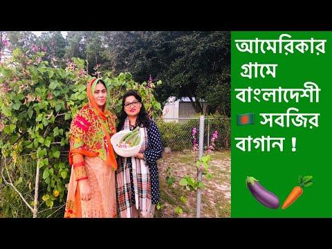 আমেরিকার গ্রামে, ভাবি ও খালাম্মা এর বাংলাদেশী সবজির বাগান |Bangladeshi Vegetable Garden In America