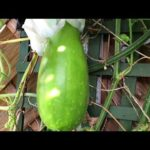 SHOKHER  BAGAN 2020 # SEPTEMBER BANGLADESHI VEGETABLE GARDEN UPDATE #END OF SUMMER GARDENING