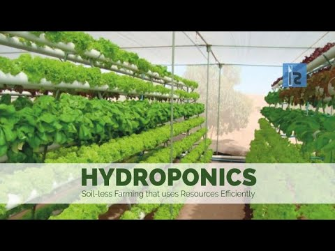 How to make mini Hydrophonics setup at home!