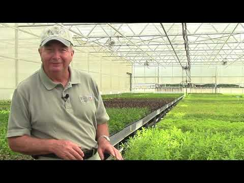Behind The Scenes – Propagation Dept. at Overdevest Nurseries with David Wilson (Watch Until End).