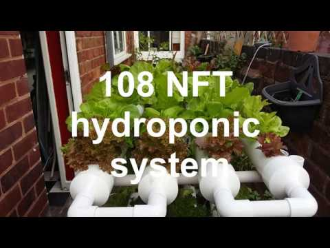 108 NFT hydroponic system, summer lettuce harvest, preppers survival