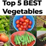 Top 5 Best Vegetables Easy To Grow In Your Vegetable Garden