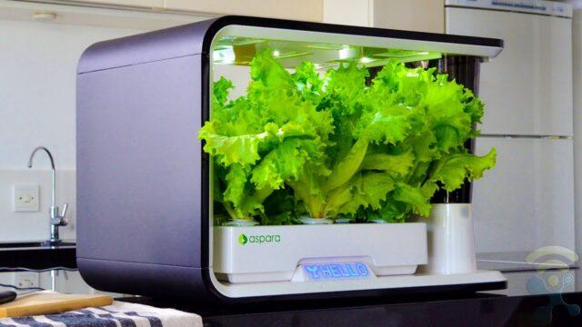 6 Best Indoor Smart Garden Systems and Smart Planters 2020
