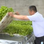 Growing hydroponic vegetables with new technology