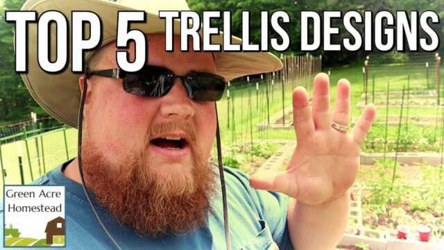 Top 5 Garden Trellises that Work!!!  |  Gardening  |  Homesteading