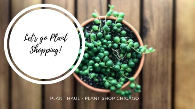 Plant Shopping! | Plant Haul – Cacti & Succulents | Plant Shop Chicago