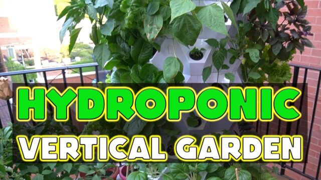 Farming without soil with the Ultimate Hydroponic System! – Hydroponic Vertical Garden