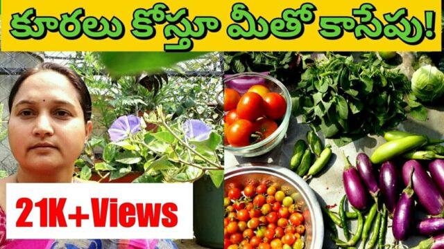 68-హార్వెస్ట్ చేద్దాం రండి Harvesting veggies| vegetable gardening leafy vegetable harvest