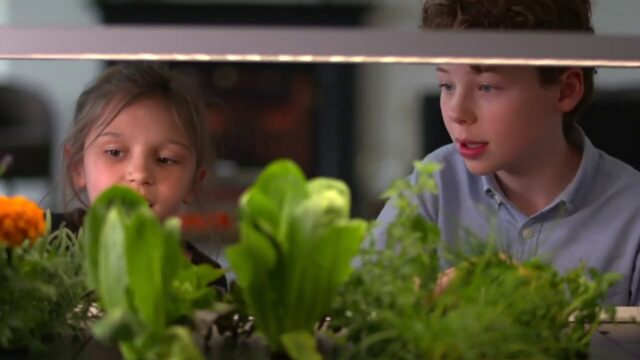 Growing Your Own Food Indoors – BBC Click
