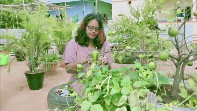 Harvesting and Health Benefits of Black-Eyed Peas    By School of Gardening  