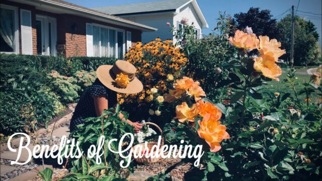 10 Benefits of Gardening | Garden Scenes in September, New Brunswick Canada | Delightful Souvenirs