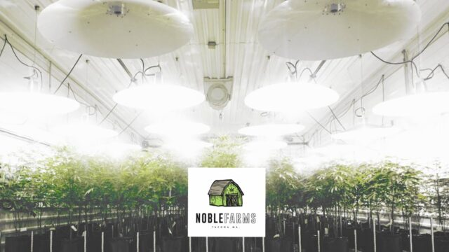 Virtual Cannabis Tours: The Noble Farms Indoor Facility