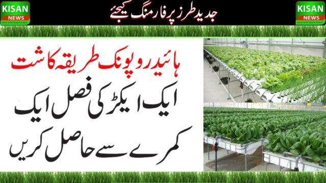 Hydroponic Farming & Food Production|Grow Food in Control Environment| ہائڈروپونک فارمنگ جدیدطرزکاشت
