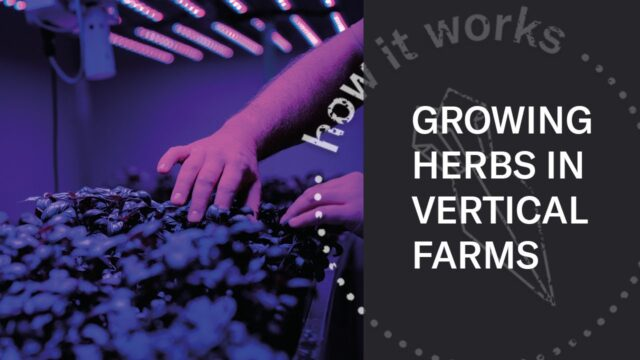 Vertical Farming | Look Inside