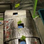 Aeroponics system cannabis grow 5/18