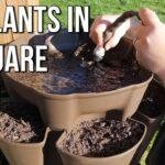 Starting Our 2020 Garden with a GreenStalk Vertical Garden Planter