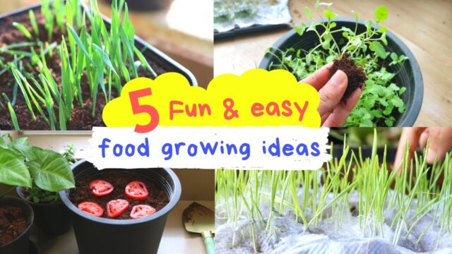 Food that Kids can Grow during the Lockdown| Find everything in your kitchen | Gardenup Hindi