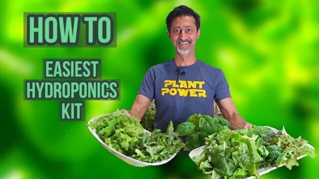 Best Hydroponics Garden Kit For Beginners | Grow During Quarantine