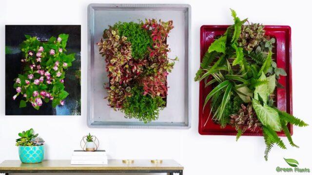 Wall Hanging Planter Making for Indoor Balcony Bedroom | Vertical Garden Wall Planter//GREEN PLANTS
