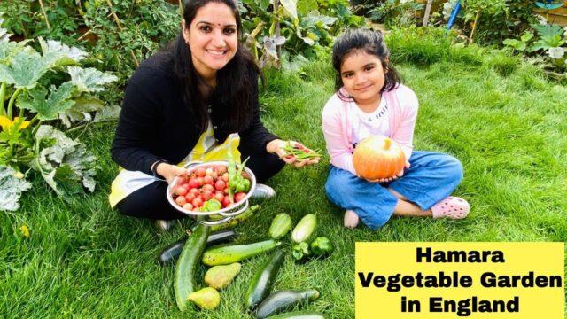 Vegetable Garden Harvesting day Sept 2020| Vegetable/Kitchen Garden in England| The Sangwan Family