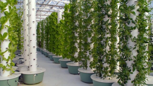 Grow 10X More In the Same Space with 90% Less Water | More Nutritious & Less Waste with Aeroponics