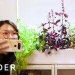 Smart Garden Grows Food Indoors With Little Effort