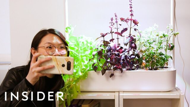 Smart Garden Grows Food Indoors With Little Effort