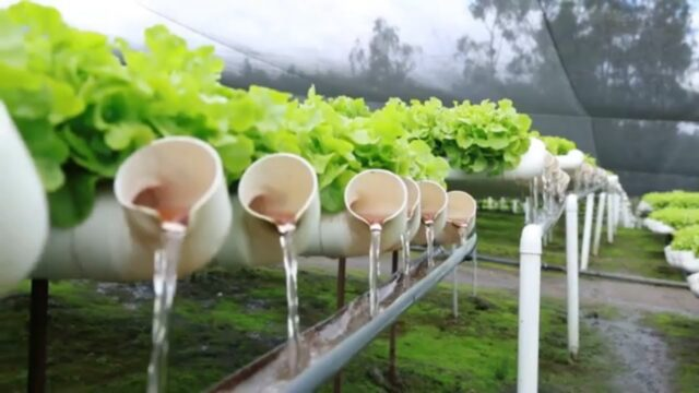 hydroponic farming you need to see