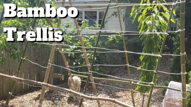 Build a Simple Bamboo Trellis